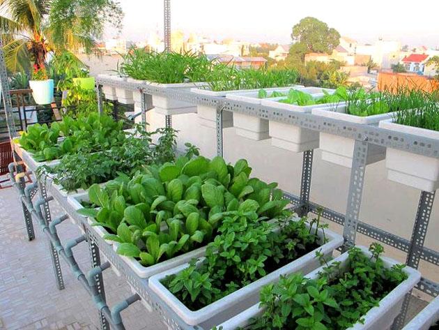 Tất tần tật các mẹo trồng rau trong thùng xốp để có vườn rau xanh mơn mởn, ăn hoài không hết