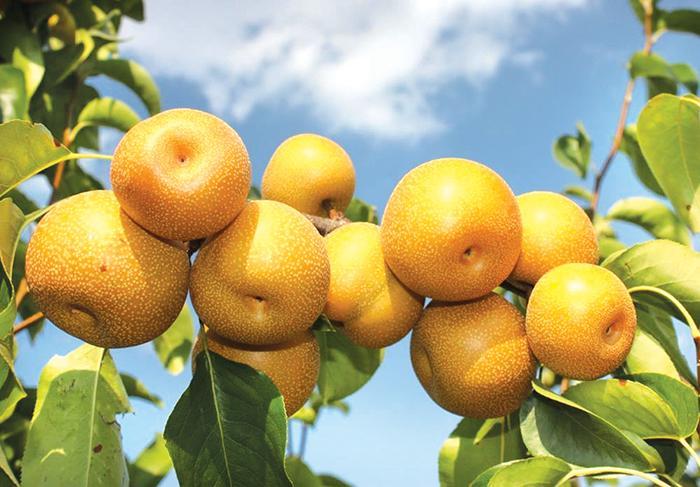 Bạn có biết loại trái cây nào ăn sau bữa cơm để loại bỏ độc tố gây ung thư trong cơ thể?