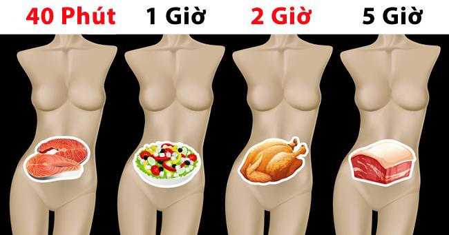 Mất bao lâu để có thể tiêu hóa hết thực phẩm ăn hàng ngày? Bạn sẽ bất ngờ với câu trả lời dưới đây!