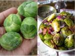 Những loại rau củ ăn chín tốt hơn ăn sống mà nhiều người lại đang dùng ngược
