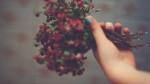 Muốn sống tốt, vì sao bạn nên tha thứ cho người từng làm bạn tổn thương chứ không nên bỏ qua?