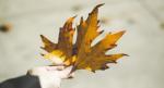 Hãy quý trọng người trước mặt: CÓ KHÔNG GIỮ, MẤT ĐỪNG TÌM