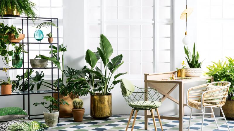 Bạn có biết đặt cây xanh trong phòng giúp Dưỡng Ẩm da không?