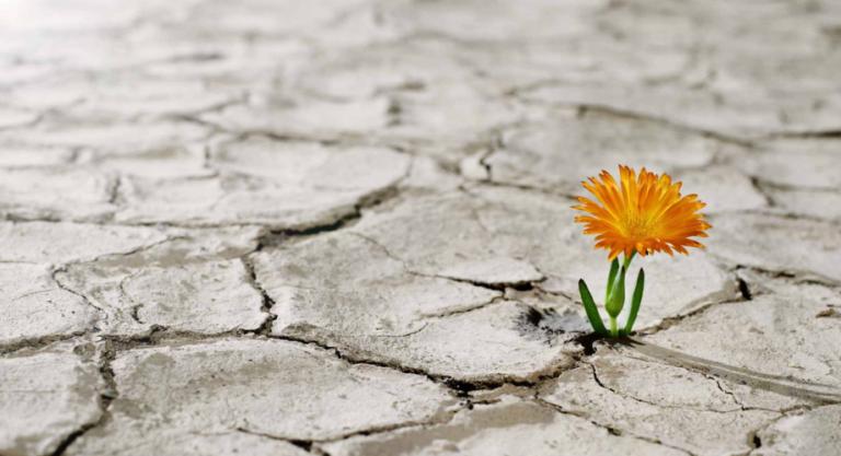 Đừng rơi vào cái bẫy của 'suy nghĩ tích cực'!