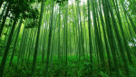 2 bài học quý giá từ cây tre, làm người muốn thành công không được phép nóng vội