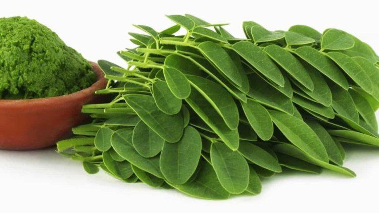 Tác dụng giảm cân không tưởng của cây chùm ngây Moringa Oleifera