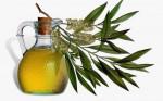 Ngạc nhiên với các loại tinh dầu ai cũng biết nhưng lại không biết cách dùng đúng để trị cảm, ho thật tốt