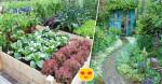 Khi già rồi, tôi sẽ tìm một mảnh vườn nhỏ, trước nhà trồng hoa, sau nhà trồng rau, một bữa trà đạm một bữa cơm thanh