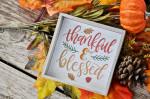 Hiểu đúng về lòng biết ơn để thấy từng điều nhỏ nhặt đều thật đáng quý