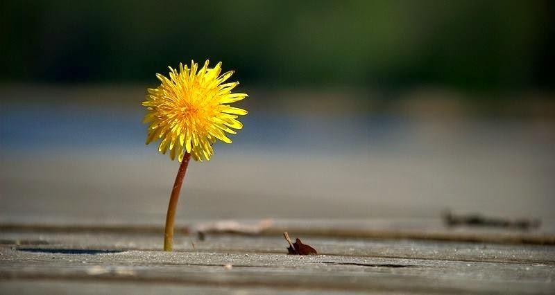 Suy cho cùng, mọi vui buồn trên đời đều bắt nguồn từ nội tâm mà thôi