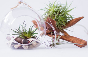 Gợi ý 9 loại cây cảnh tốt nhất có thể trồng trong nhà bếp để làm sáng không gian nhà bạn