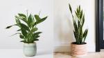 Trồng ngay 5 loại cây này trong nhà, vừa hút khí độc vừa làm đẹp không gian