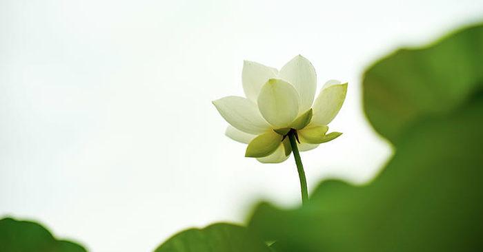 Như hoa như ngọc sinh cao quý, Thiện – Ác một niệm thấu trời xanh