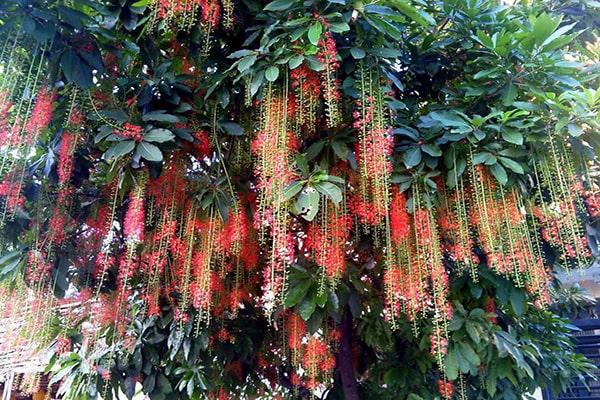 Trồng cây này trong nhà gia đình dễ hoà thuận giàu có ai cũng nên trồng
