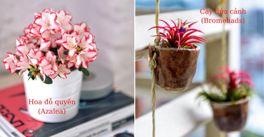 14 loại cây cảnh vừa đẹp lại hút hết khí độc và hóa chất trong nhà mà các bạn nên trồng