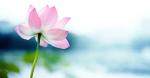 """""""Từ bi"""" có tác dụng phi thường to lớn: 4 cách nuôi dưỡng và 5 ích lợi to lớn của tâm từ bi"""