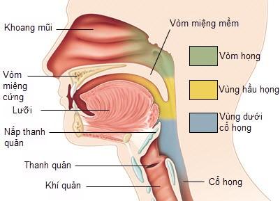 Những nguyên nhân gây ra ung thư vòm họng
