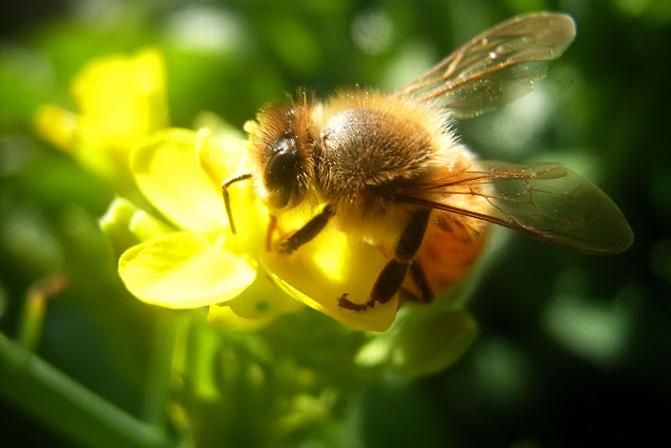 Những lợi ích bất ngờ khi sử dụng sữa ong chúa