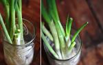 Cách trồng hành trong gian bếp
