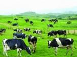 Sữa tươi gây nguy hiểm đến sức khỏe?
