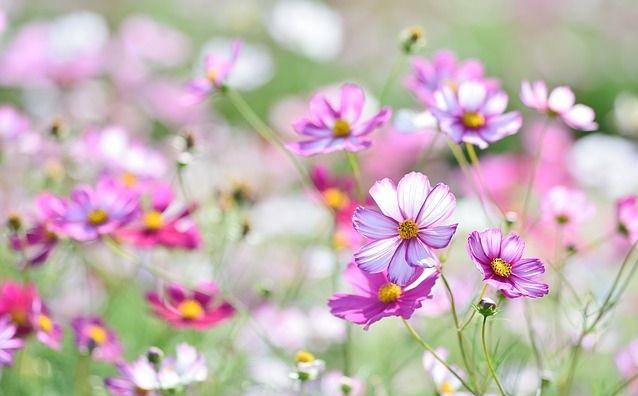 hoa đẹp tháng 8