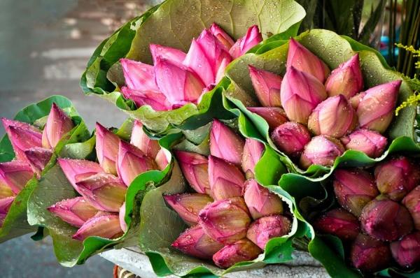 hoa sen tháng 6